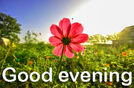 Good Evening Images Wallpaper Pic With Flower