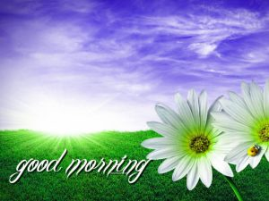 Good Morning Images For Whatsaap