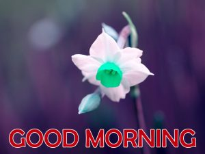 Flowers Good Morning Images Photo Pictures For Whatsaap