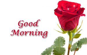 Flowers Good Morning Images Photo With Red Rose