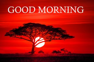 Good Morning Images Photo Pics For Whatsaap In HD Download
