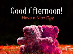 Good Afternoon Images Photo HD Download