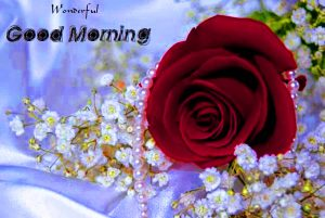 gd mrng Images Wallpaper Pictures With Red Rose