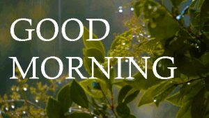 Good Morning Images Photo Pics In HD Download
