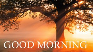 Good Morning Images Wallpaper Pictures In HD Download