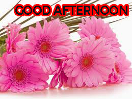 Good Afternoon Images Wallpaper Pics Free Download