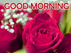 Red Rose Happy Good Morning Images Photo Pics Download