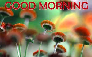Flowers Good Morning Images Photo Pics Free Download