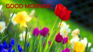 Flowers Good Morning Images Photo Pictures HD For Facebook