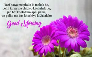 gd mrng Images Photo Pics With Shayari Download