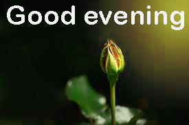 Good Evening Images Wallpaper Pictures Download