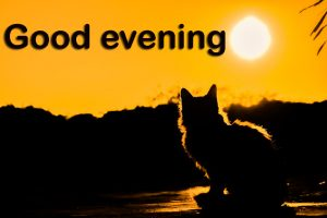 Good Evening Images Photo Free Download
