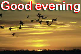 Good Evening Images Photo Pics Download for Whatsaap