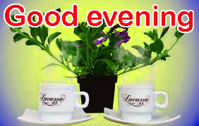 Good Evening Images Pictures Wallpaper With Flower