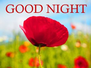 Good Night Images Wallpaper Pics With Flower Download