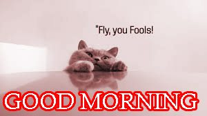 Good Morning Images Wallpaper Download In HD