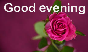Good Evening Images Wallpaper Pic With Red Rose