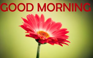 Flowers Good Morning Images Photo Pics Download