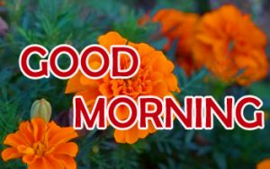 Flowers Good Morning Images Pictures Download