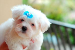Cute Images Photo HD Download