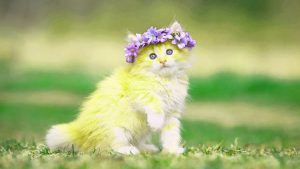Cute Images Wallpaper Photo Pics Free Download