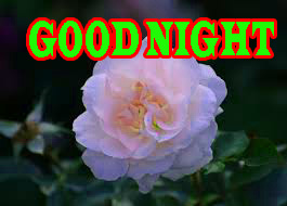 New good night Images Wallpaper Pics Download With Rose