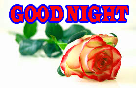 New good night Wallpaper Pictures Download With Red Rose