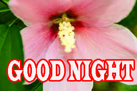 New good night Wallpaper Pics Download for Whatsapp