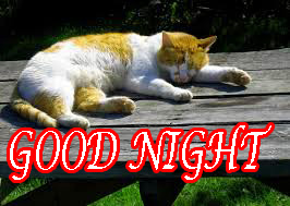 Latest Gud Night Images Photo Wallpaper Download