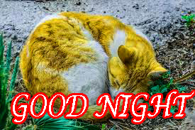 Latest Gud Night Wallpaper Pictures Images Photo Download