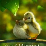bird good morning images wallpaper pictures photo free hd download
