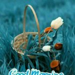good morning images wallpaper pictures photo free hd download