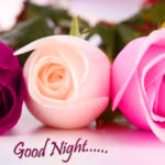 red rose good night images wallpaper photo pics pictures HD