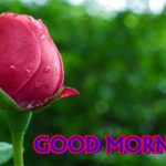 new flower good morning images photo pictures pics hd