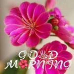 very nice good morning images photo wallpaper pics download