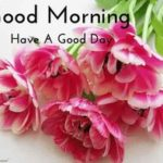 flower good morning images for new love pics wallpaper photo hd