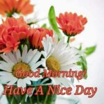 flower good morning images pictures pics download hd
