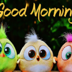 funny good morning images photo wallpaper pictures free hd download