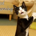 funny good morning images photo pictures wallpaper download hd