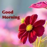new flower good morning images wallpaper pictures free hd