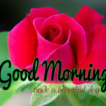 flower good morning images photo wallpaper pictures pics hd