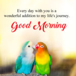 bird good morning images pictures wallpaper download
