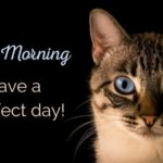 very funny good morning images photo wallpaper pictures hd