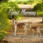 nature good morning images wallpaper photo pictures free hd