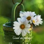latest new flower good morning images pictures photo hd download