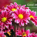 flower good morning images photo pics wallpaper free hd