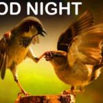 funny good night images wallpaper photo pictures download for facebook