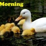 bird good morning images pictures photo wallpaper download