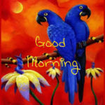 bird good morning images pictures photo free hd
