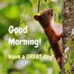 bird good morning images for couple pictures download